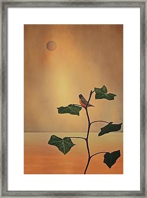 A Moment Of Zen Framed Print by Tom York Images