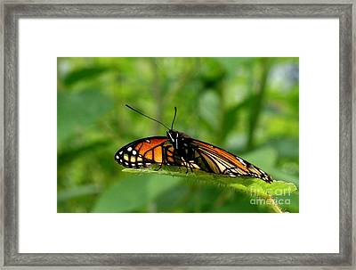 A Monarch View Framed Print by Neal  Eslinger