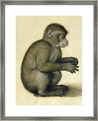 A Monkey Framed Print by Albrecht Durer