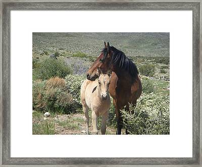 A Mother's Covering Framed Print by Donna Jackson