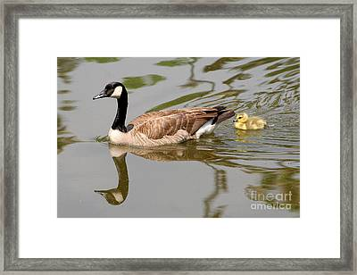 A Mother's Love Framed Print by Bob and Jan Shriner
