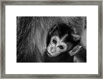 A Mother's Love Framed Print by Gunarto Song