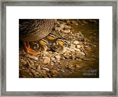 A Mother's Love Framed Print by Robert Frederick
