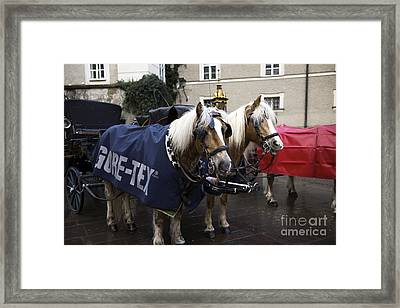 A Pair Of Ponies In Salzburg Framed Print by John Rizzuto