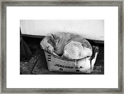 A Place To Sleep Framed Print by John Rizzuto