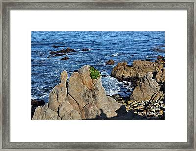 A Plant Grows On Ancient Seaside Rocks Framed Print by Susan Wiedmann