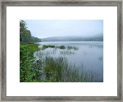 A Poetry Of Mist Framed Print by Lynda Lehmann