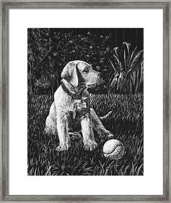 A Puppy With The Ball Framed Print by Irina Sztukowski