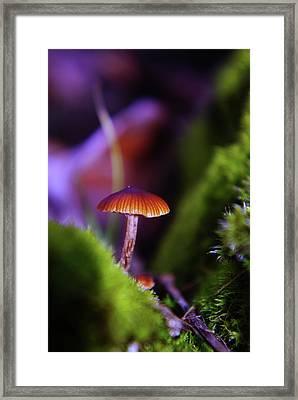 A Red Mushroom  Framed Print by Jeff Swan