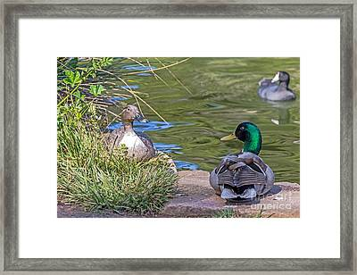 A Restful Moment Framed Print by Kate Brown