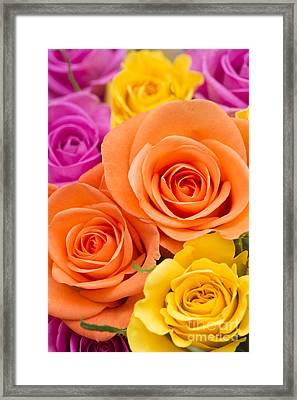 A Riot Of Roses Framed Print by Anne Gilbert
