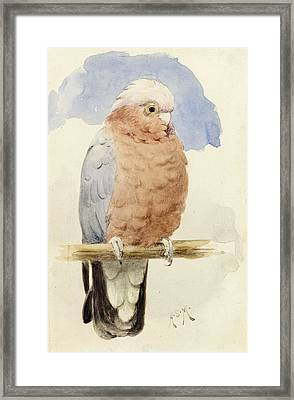 A Rose Breasted Cockatoo Framed Print by Henry Stacey Marks