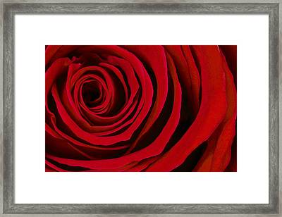 A Rose For Valentine's Day Framed Print by Adam Romanowicz