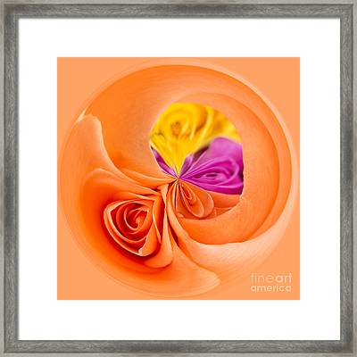 A Round Of Roses Framed Print by Anne Gilbert
