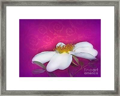 A Royal Rose Framed Print by Judi Bagwell