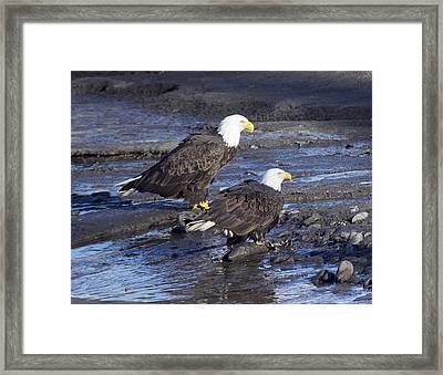A Salmon For Both Of Us Framed Print by Elvira Butler