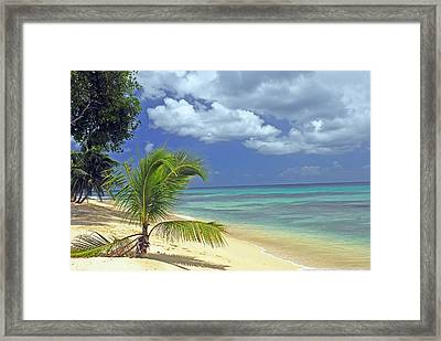 A Secluded Beach In Barbados Framed Print by Willie Harper