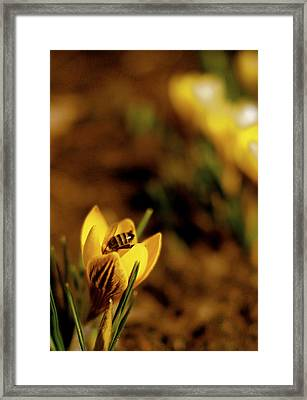 A Sign Of Spring Framed Print by Rona Black