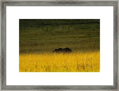 A Silver Back Framed Print by Jeff Swan