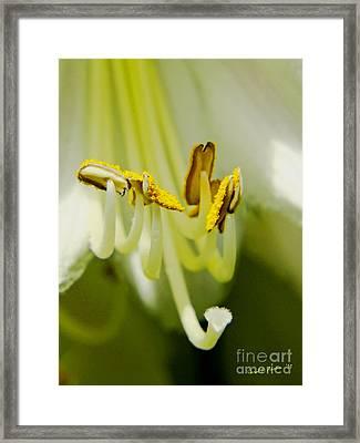 A Single Flower In Full Bloom Framed Print by Carol F Austin