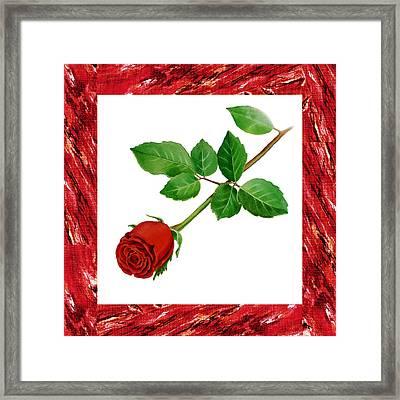 A Single Rose Burgundy Red Framed Print by Irina Sztukowski