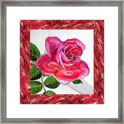 A Single Rose Juicy Pink  Framed Print by Irina Sztukowski