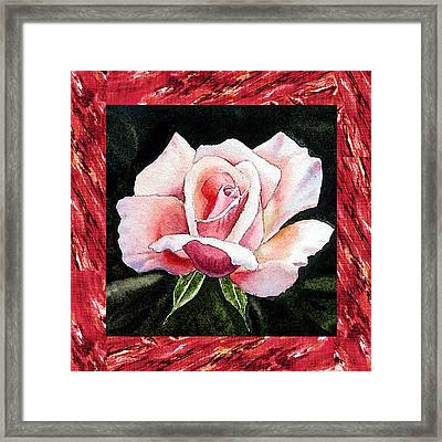 A Single Rose Mellow Pink Framed Print by Irina Sztukowski