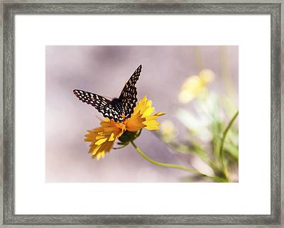 A Sip Of Coreopsis Framed Print by Caitlyn  Grasso
