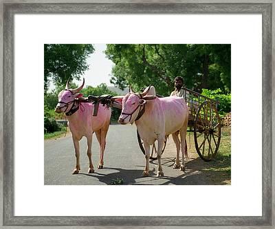 A Slice Of Rural Life In A Village Framed Print by Jaina Mishra