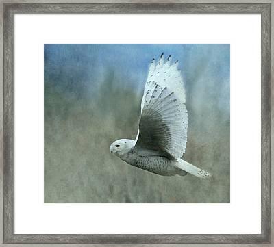 A Snowy Flight Framed Print by Angie Vogel