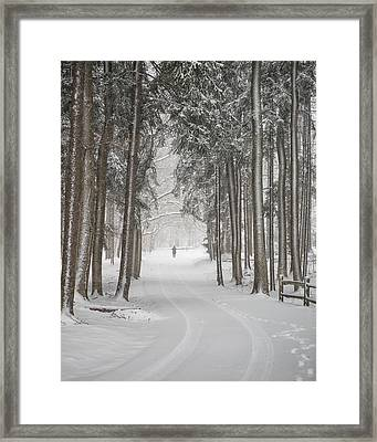 A Solitary Winter Wanderer Framed Print by Dick Wood