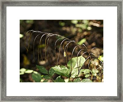A Speck In God's Eye Yet Precious In His Sight Framed Print by Mother Nature