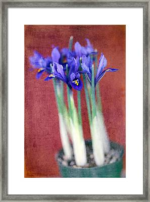 A Spot Of Color Framed Print by Rebecca Cozart