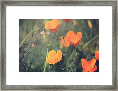 A Springtime Breeze Framed Print by Laurie Search