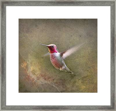 A Star Is Born Framed Print by Angie Vogel
