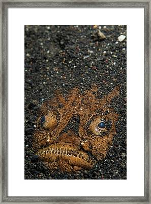 A Stargazer Half Buried In The Sand Framed Print by Scubazoo