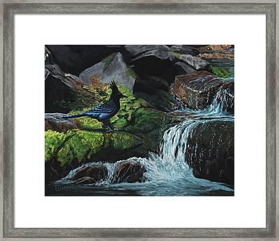 A Stellar Blue Jay Day Framed Print by Timithy L Gordon