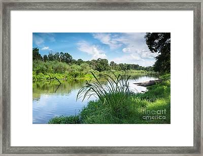 A Summer Day Of Stubblefield Waterplants Framed Print by Ellie Teramoto