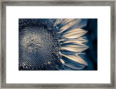 A Sunflower Dream Framed Print by Isabel Laurent