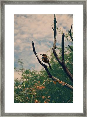A Sweet Song Framed Print by Laurie Search