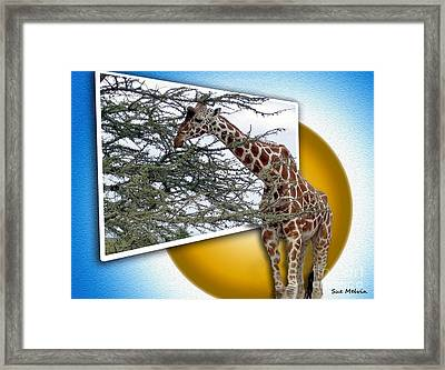 A Taste From The Other Side Framed Print by Sue Melvin