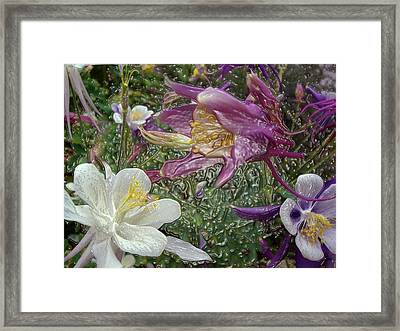 a taste of dew i do and PCC  garden too     GARDEN IN SPRING MAJOR Framed Print by Kenneth James