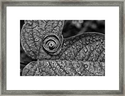 A Tendril Coil - Bw Framed Print by Christopher Holmes
