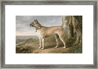A Terrier On A Path In A Wooded Landscape Framed Print by Charles Towne