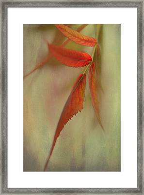 A Touch Of Autumn Framed Print by Annie Snel