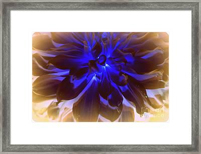 A Touch Of Blue Framed Print by Dora Sofia Caputo Photographic Art and Design