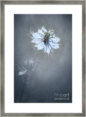 a Touch of Blue Framed Print by Svetlana Sewell
