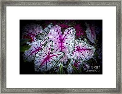A Touch Of Red Framed Print by Marvin Spates
