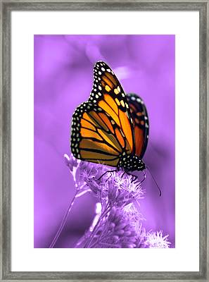 A Touch Of Summer  Framed Print by Cathy  Beharriell