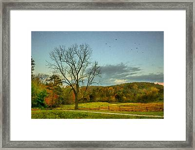 A Tree At Valley Forge Framed Print by Jeff Oates Photography